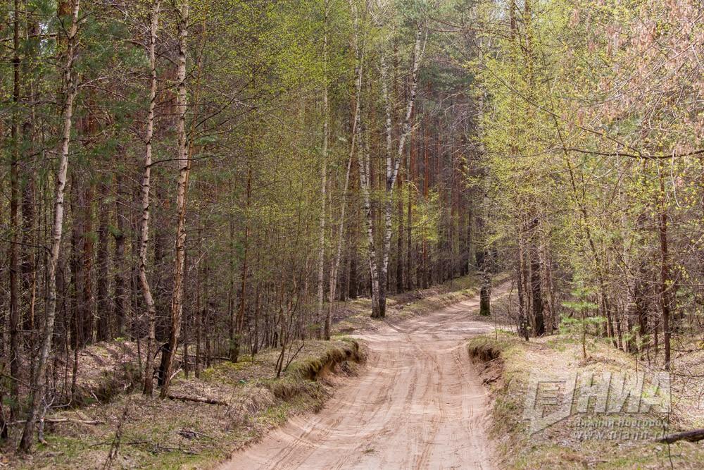 Высокая пожароопасность лесов сохраняется вНижегородской области