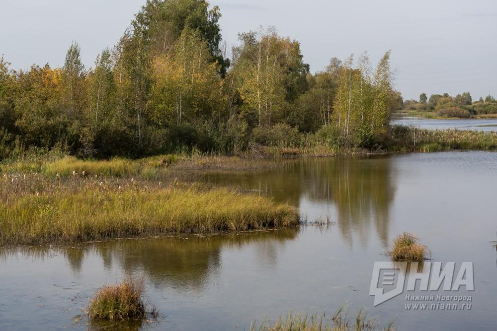 61-летний Григорий Григорьев потерялся влесу вНижегородской области