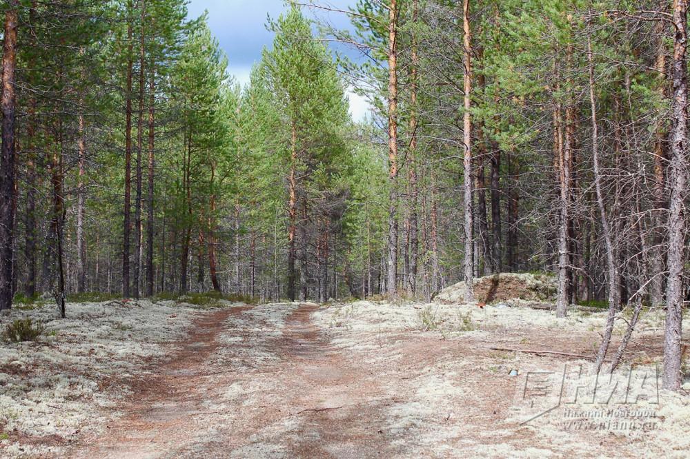Нижегородская область вошла вТОП-10 регионов повосстановлению леса