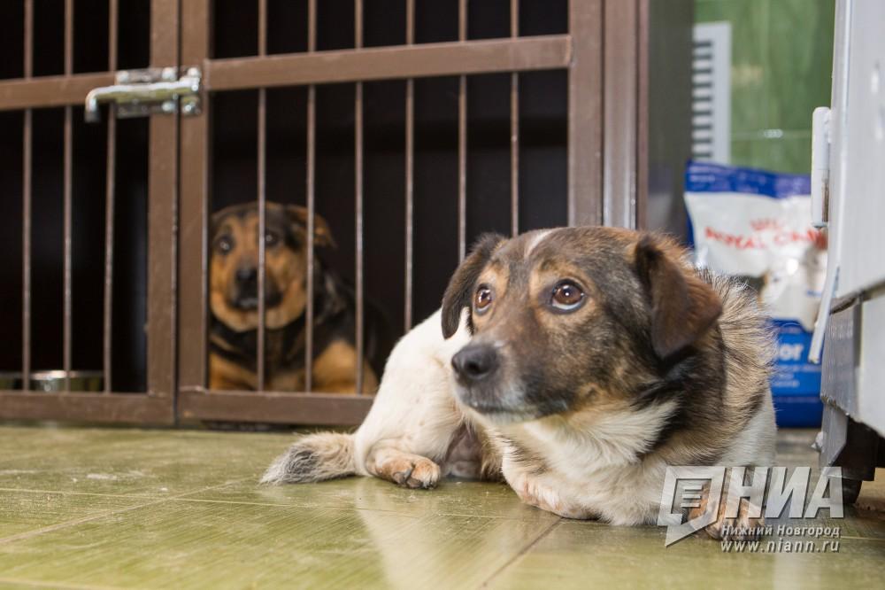 Историей сконцлагерем для собак вНижнем Новгороде заинтересовался Следственный комитетРФ