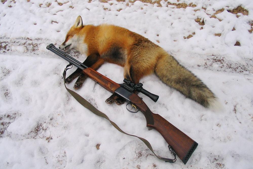 Охотник нелегально подстрелил лису вАрдатовском районе