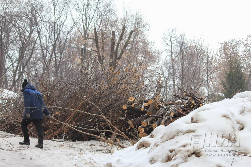 ВНижнем Новгороде умузея Горького вырубают 50 здоровых столетних лип