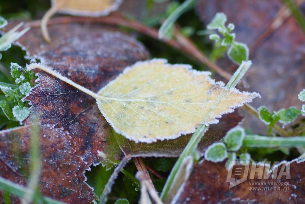 ВНижегородской области вероятны заморозки до-5ºС