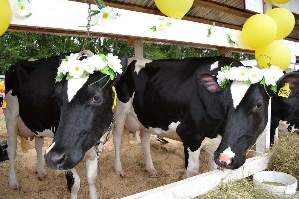 Нижегородский молокозавод сбрасывал отходы производства влес
