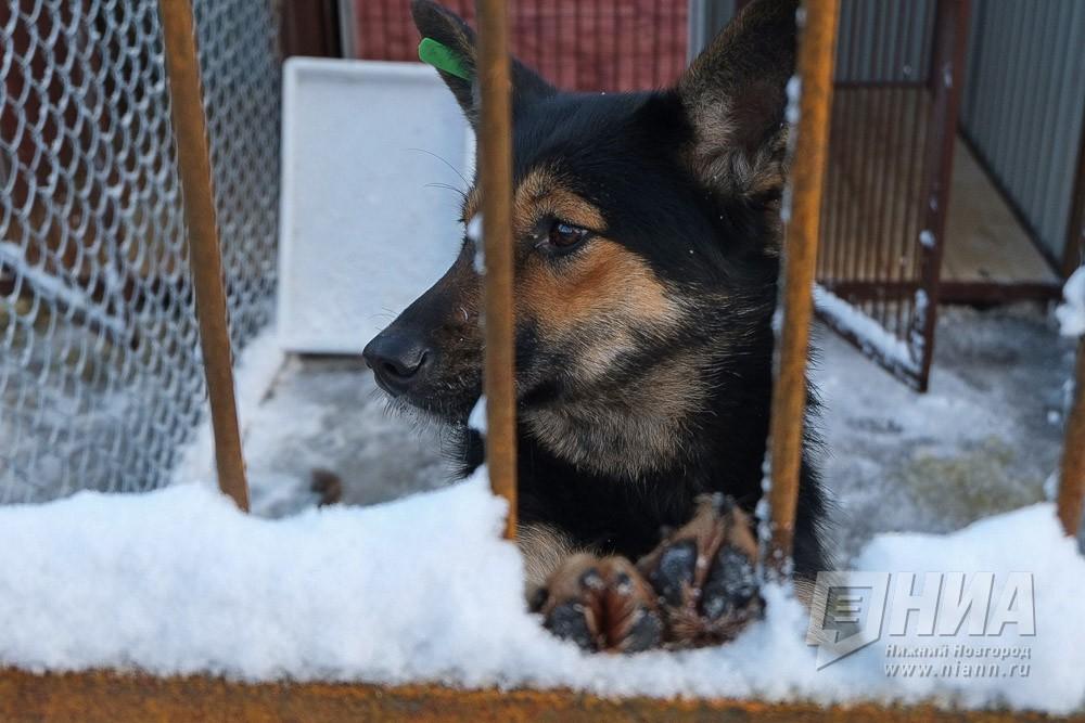 Полмиллиона руб. заплатит организация, устроившая вНижнем Новгороде «концлагерь для собак»