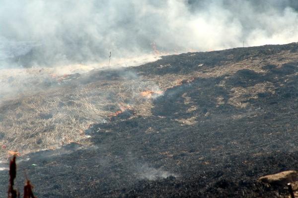 Сухая трава на площади 550 кв. метров сгорела в Нижегородской области 14 мая