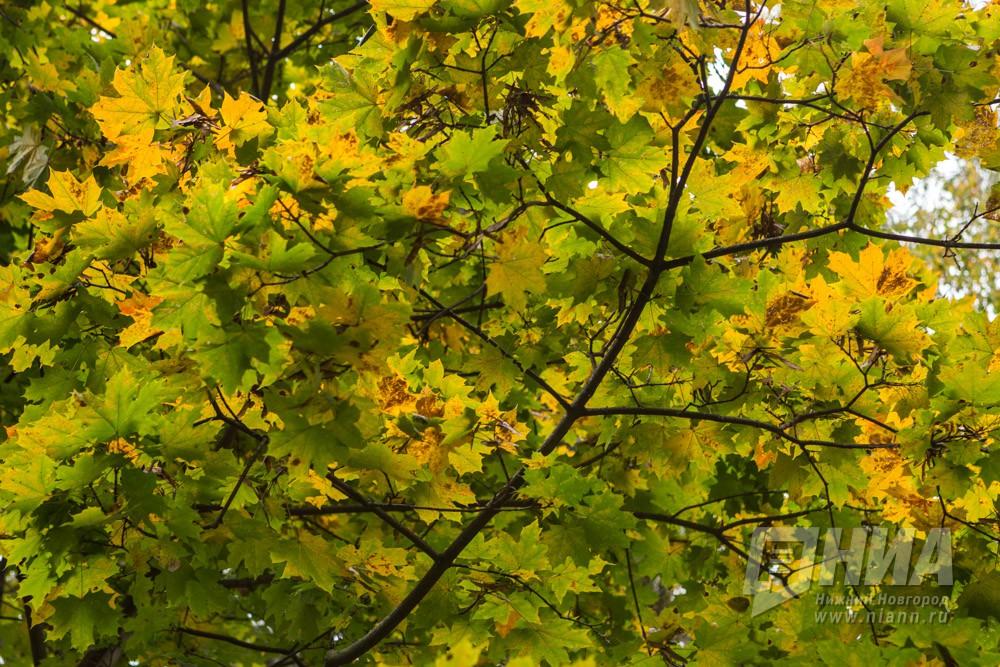 Синоптики ожидают вторую волну бабьего лета в середине сентября