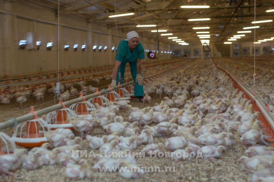 Российские переработчики мяса птицы договорились пока не повышать цены